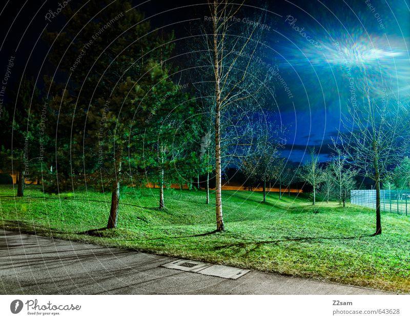 sie sind da! Himmel Frühling Baum Gras Sträucher Wiese Stadt Menschenleer Verkehrswege Wege & Pfade glänzend dunkel fantastisch kalt blau grün Einsamkeit