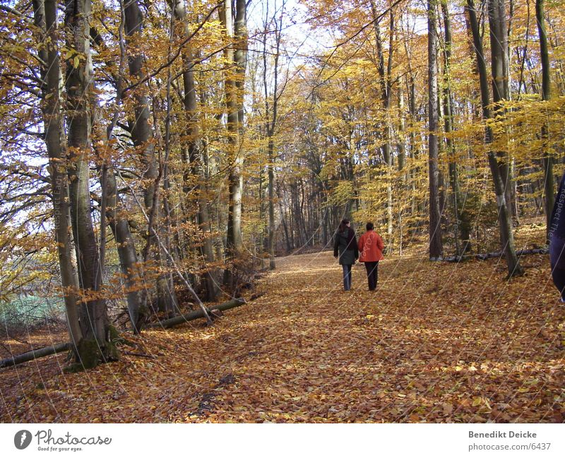 Herbst 2 Mensch Baum Blatt gelb Wald Jahreszeiten
