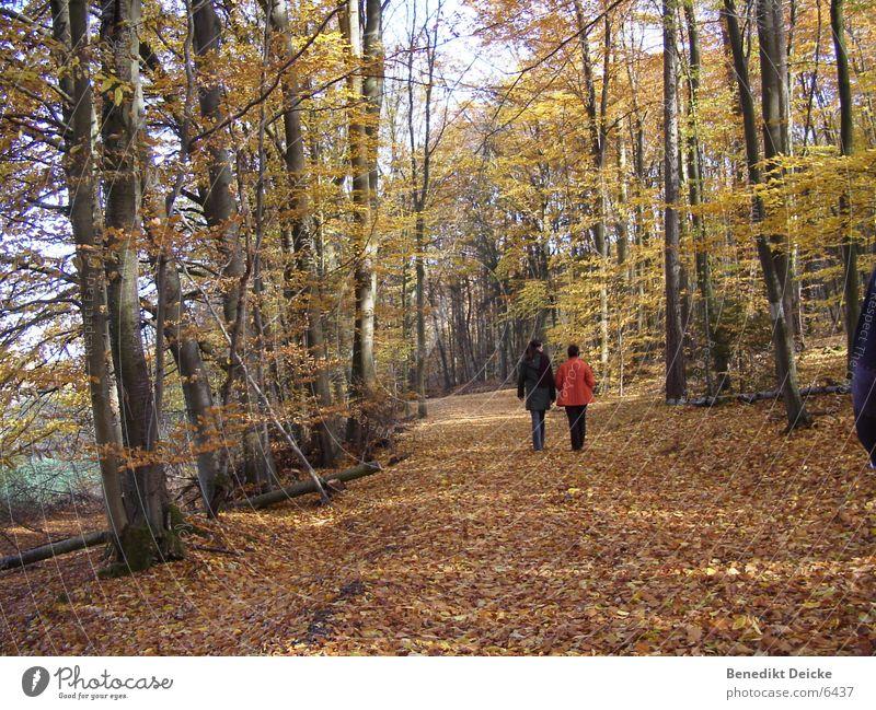 Herbst 2 Wald Blatt gelb Baum Jahreszeiten Mensch