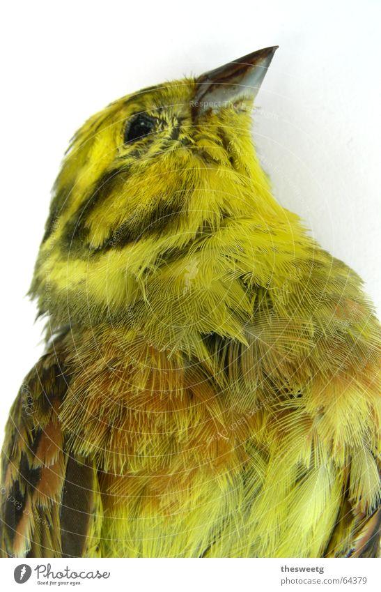 Toter Vogel Einsamkeit Tod gehen Feder trist ausdruckslos Verschiedenheit Schnabel verloren vergangen Leiche Spatz Federvieh Spaßvogel Totes Tier ausgebleicht