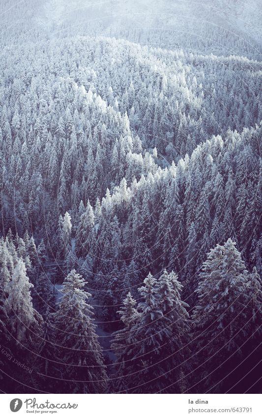 into the wild Natur Landschaft Winter Ferne kalt Wald Berge u. Gebirge Umwelt Hügel Schweiz Baumkrone Kanton Graubünden
