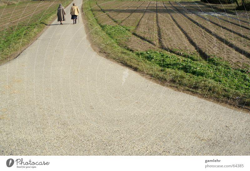 Zwei Omas auf dem Weg Mensch Frau alt grün Erwachsene Leben Senior Wege & Pfade Zufriedenheit Feld gehen wandern Zukunft Fußweg 60 und älter genießen