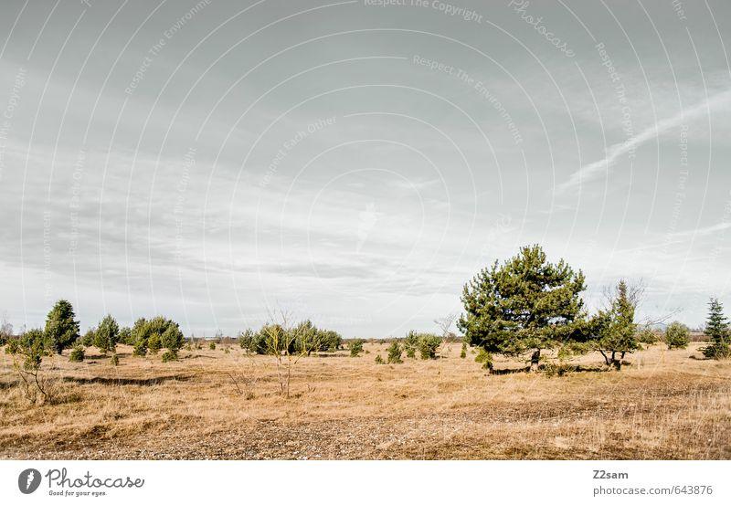 BAVARIAN DESERT Umwelt Natur Landschaft Himmel Horizont Herbst Dürre Baum Gras Sträucher Wiese nachhaltig natürlich trist trocken blau braun grün Einsamkeit