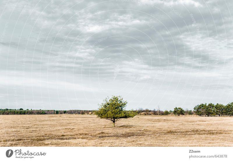BAVARIAN DESERT II Natur blau grün Baum Einsamkeit Landschaft ruhig Wolken Ferne Umwelt Wiese Herbst Gras natürlich braun Horizont