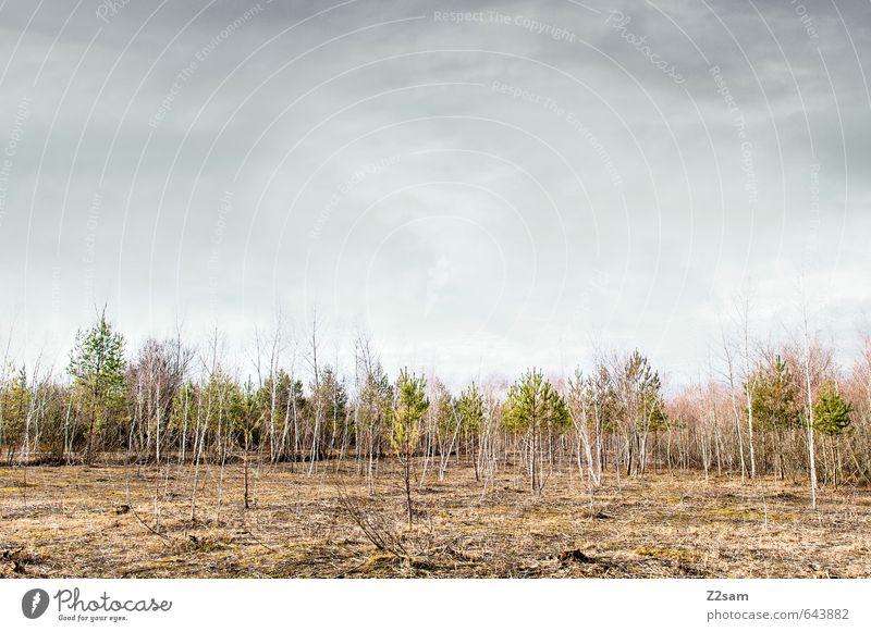 MINI WALD Himmel Natur Jugendliche blau Baum Einsamkeit Erholung rot Landschaft ruhig Wolken Wald Umwelt Herbst natürlich rosa