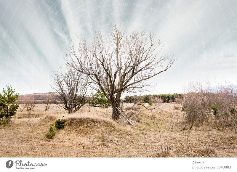 BAVARIAN DESERT III Natur blau grün Baum Einsamkeit Landschaft ruhig Ferne Umwelt Wiese Herbst Gras natürlich braun Horizont Idylle