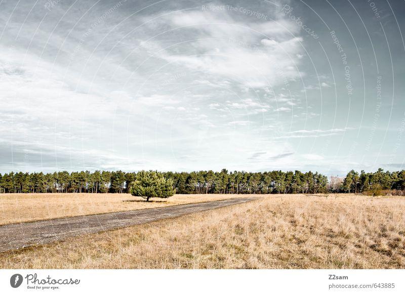 Straße im Nirgendwo Himmel Natur blau Baum Einsamkeit Erholung Landschaft ruhig Wolken Wald Umwelt Wiese Herbst braun Feld