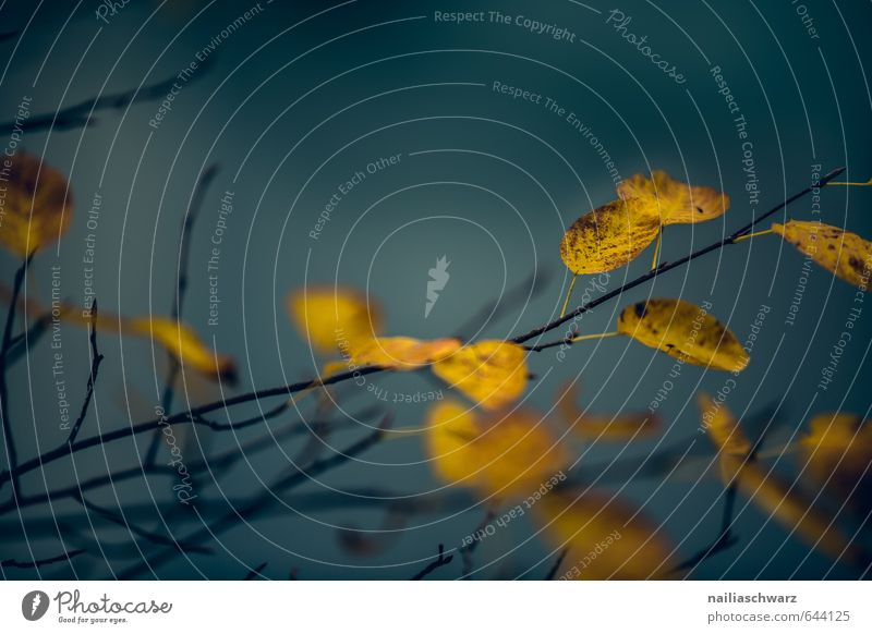 Herbstblätter Umwelt Natur Pflanze Baum Blatt Ast Zweige u. Äste Herbstlaub Garten Park Wald glänzend verblüht dehydrieren natürlich schön trocken blau gelb