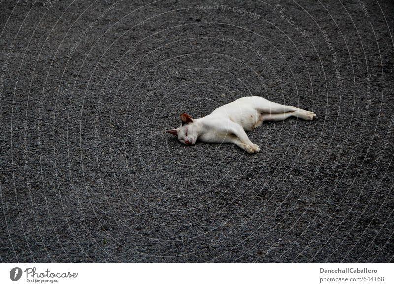 street cat Katze weiß Einsamkeit Erholung ruhig Tier Straße Traurigkeit Tod grau Freiheit liegen Zufriedenheit Lifestyle schlafen Asphalt