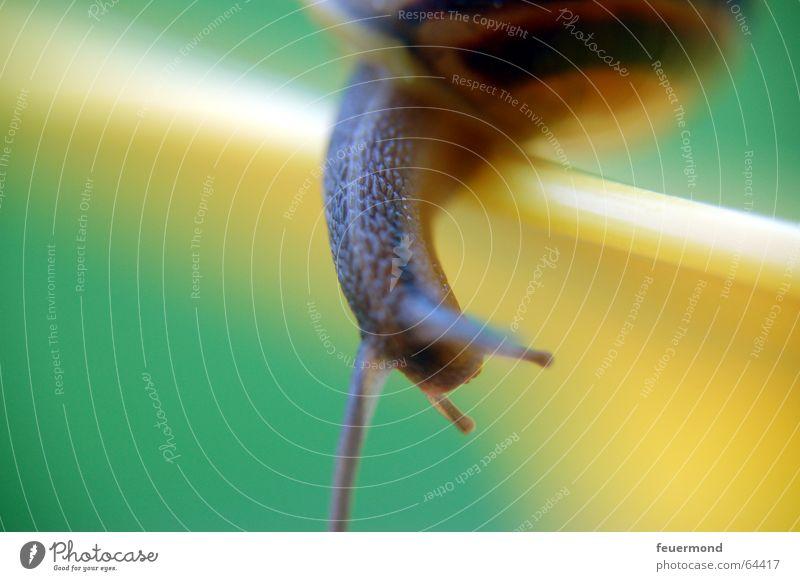 Ey, du da unten! Schnecke Teller Schneckenhaus Tier krabbeln snail creep