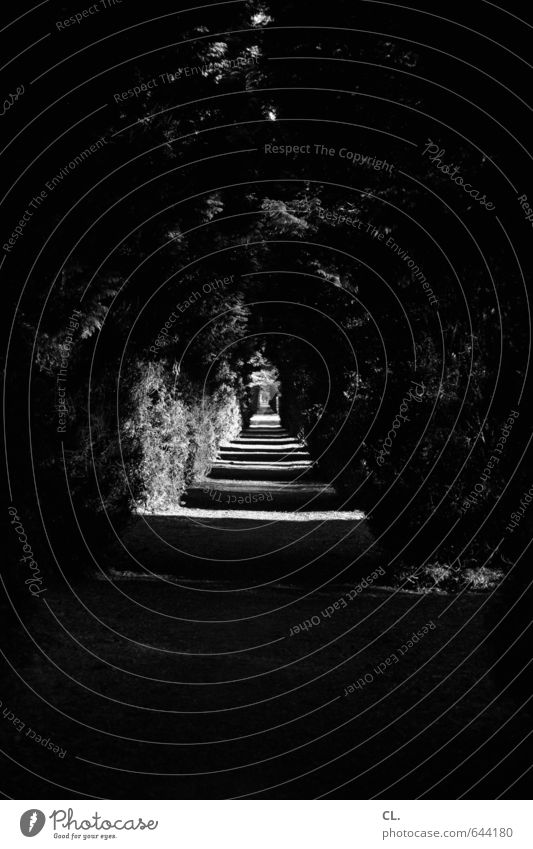 weg Umwelt Natur Landschaft Schönes Wetter Baum Sträucher Park dunkel ruhig Hoffnung Traurigkeit Sehnsucht Fernweh Einsamkeit Beginn Ende Perspektive