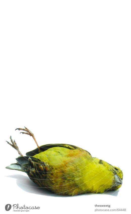 Toter Vogel 2 Pechvogel Kauz Spaßvogel Flugzeugunglück Desaster Sturz Ablösung Tod Abschied Flüssigkeit fahren Daunen Feder Schnabel Absturz pieper Spatz