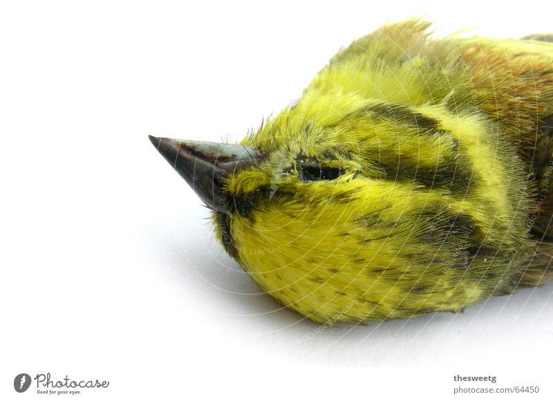 Toter Vogel 4 Tod fahren Ende Feder Flüssigkeit Sturz Abschied Desaster Schnabel Absturz Eulenvögel Spatz Spaßvogel Daunen Kauz