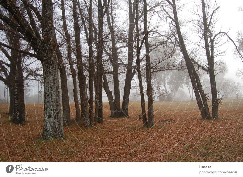 morning mist New South Wales Australien Winter forest trees armidale cold leaves landscape Nebel