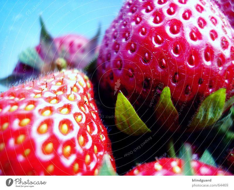 Frisch, rot, süß und saftig grün rot Frucht frisch Ernährung süß gut Küche Appetit & Hunger Ernte Samen saftig Zucker Erdbeeren Torte Dessert