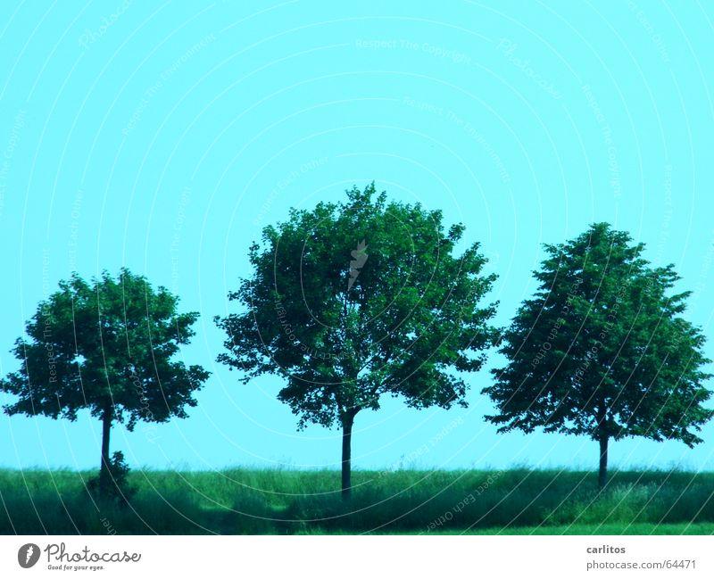 drei Freunde Himmel Baum 3 Schönes Wetter Allee Straßenrand Linde