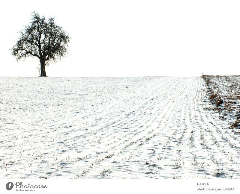 einzelner Baum steht links oben am Bildrand auf einem schneebedeckten Acker Landwirtschaft Feld Schnee weiß schwarz graphisch Einsamkeit Ferne Schneelandschaft
