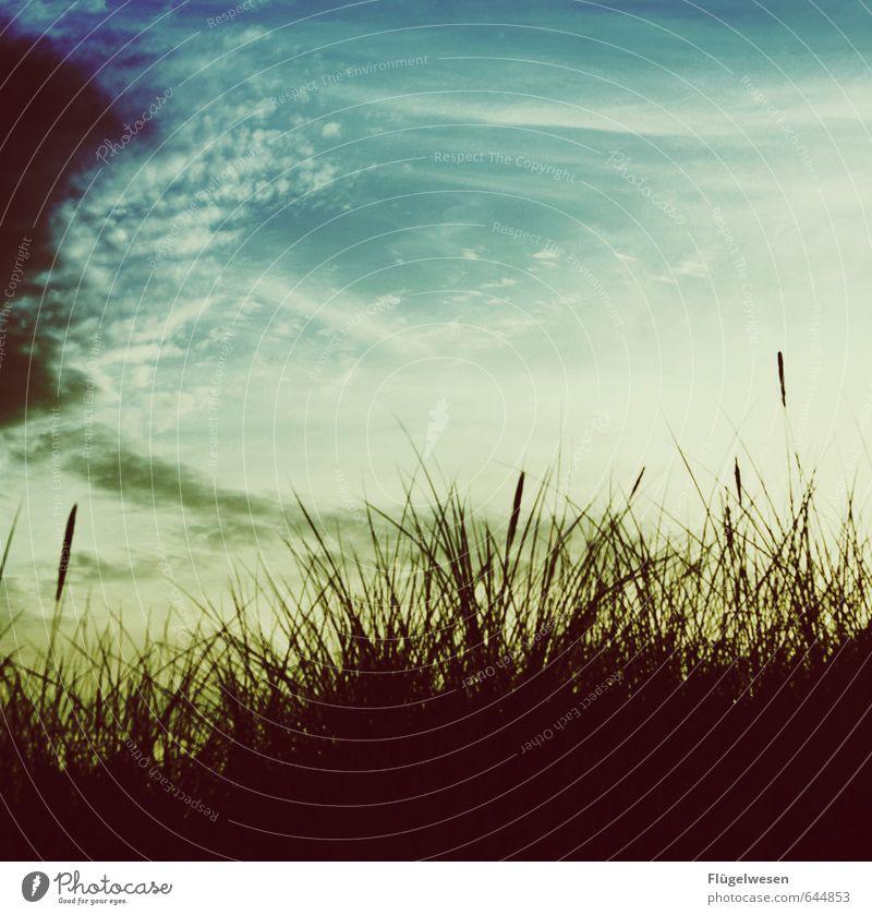 Sommererinnerung Sonnenaufgang Sonnenuntergang nachhaltig Verliebtheit sommerlich Sommerurlaub Sommerabend Sommertag Sommerferien Sommernacht Strand Stranddüne