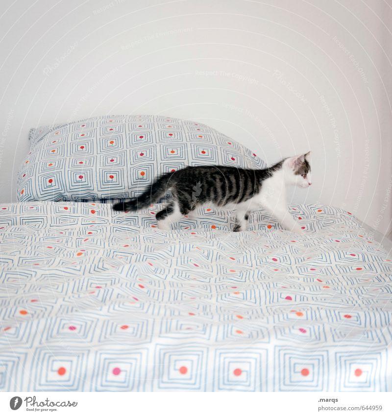 Entdecken Wohnung Bett Tier Haustier Katze 1 Tierjunges entdecken gehen ästhetisch Neugier Suche niedlich hell Farbfoto Innenaufnahme Menschenleer