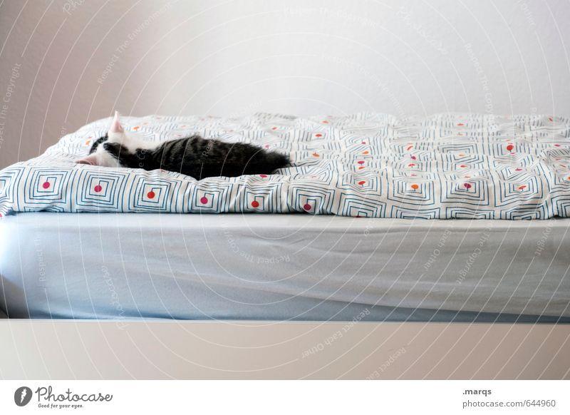 Kalle pennt Katze schön Erholung ruhig Tier Tierjunges klein hell liegen Wohnung Zufriedenheit niedlich schlafen Bett Haustier Geborgenheit