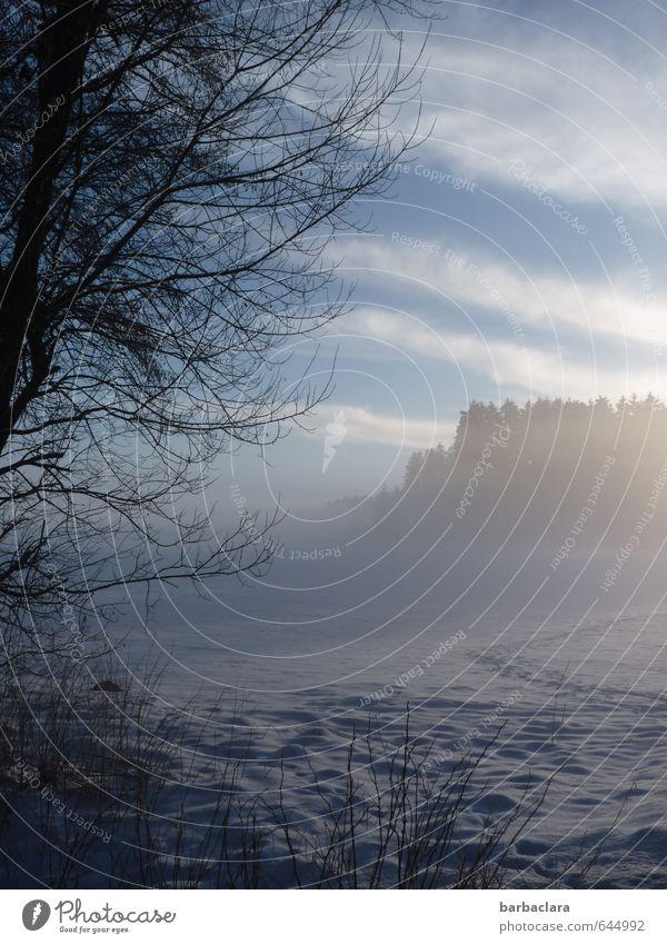 Wo sich Fuchs und Hase... Landschaft Himmel Sonnenaufgang Sonnenuntergang Winter Nebel Schnee Baum Sträucher Wald Fußspur kalt blau Stimmung Einsamkeit Natur