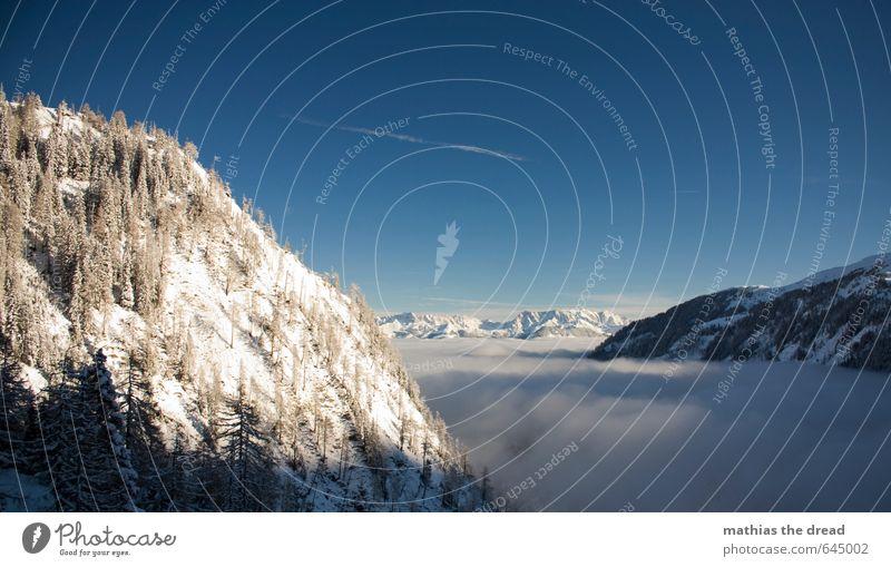 HIER OBEN SCHEINT JA DIE SONNE! Umwelt Natur Landschaft Himmel Wolken Horizont Winter Schönes Wetter Eis Frost Schnee Baum Wald Alpen Berge u. Gebirge Gipfel
