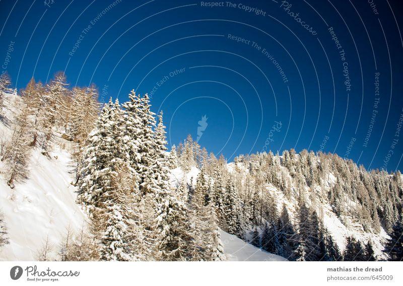 WAS WÜRDE ICH FÜRS BOARDEN GEBEN Umwelt Natur Landschaft Himmel Wolken Winter Wetter Schönes Wetter Eis Frost Schnee Schneefall Pflanze Wald Alpen