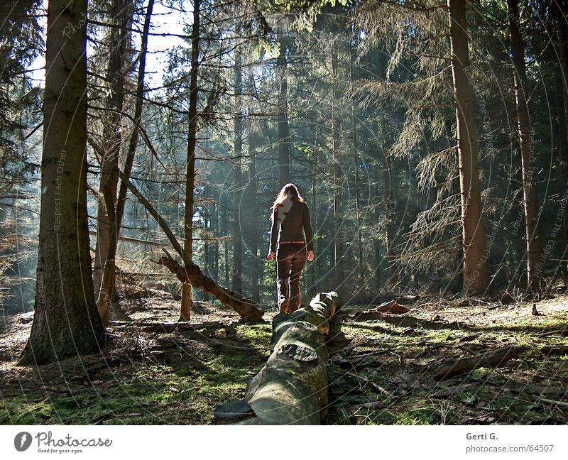 licht Wald Baum Tanne grün braun Lichtstimmung Waldlichtung Sonnenlicht Frau Baumstamm Geäst Waldspaziergang Nadelwald Heide Sträucher Natur Mensch Einsamkeit