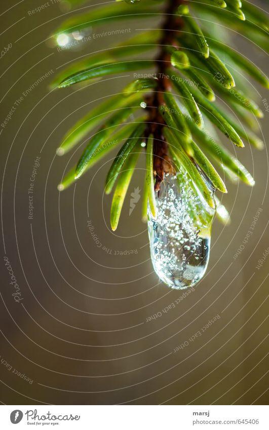 Tropfen mit Einschlüssen Natur Pflanze grün Wasser Baum Einsamkeit Winter kalt Herbst natürlich träumen glänzend Eis leuchten elegant authentisch