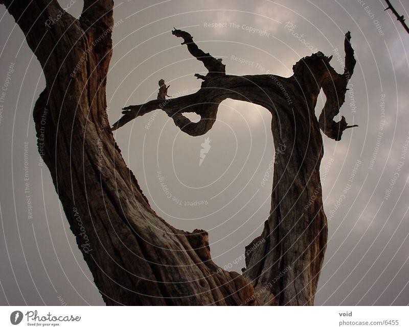 Baum Himmel Tod
