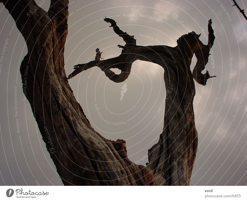 Baum Tod Himmel