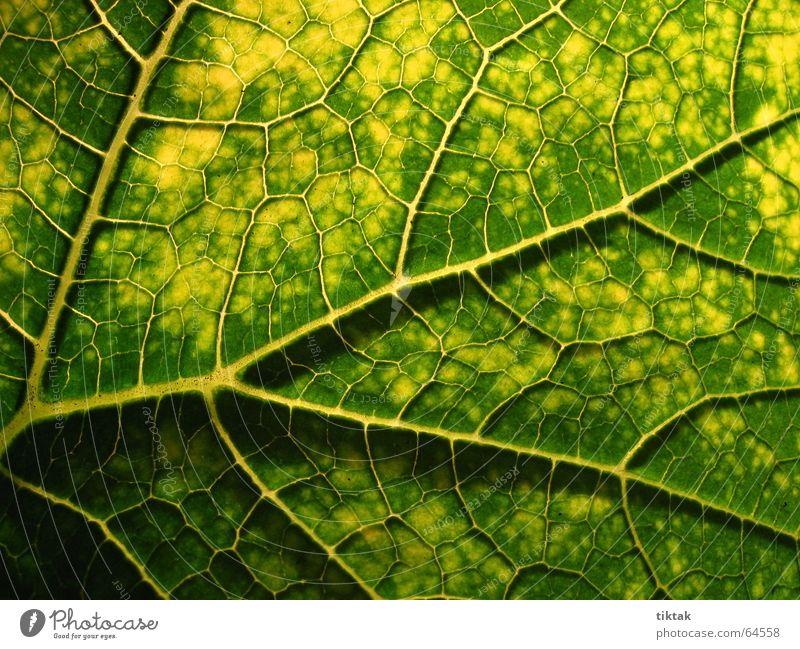 Alle Wege führen zur Wurzel Blatt Gefäße Blattunterseite Botanik Pflanze grün gelb braun Blattadern Licht Beleuchtung welk Blattgrün Wachstum Versorgung
