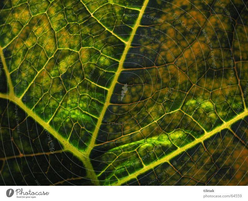 Alle Wege führen zur Wurzel Blatt Gefäße Blattunterseite Botanik Pflanze grün gelb braun Blattadern Licht Beleuchtung welk Blattgrün Wachstum Versorgung Physik
