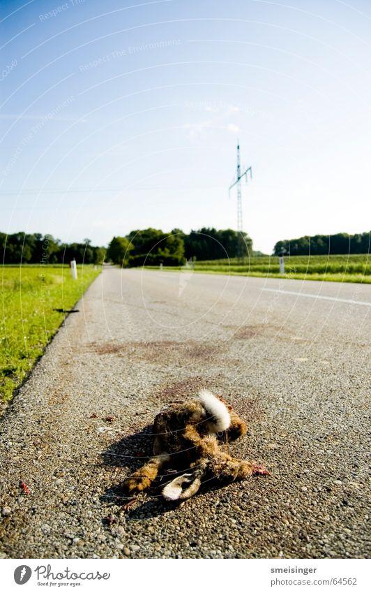 Mittagsschläfchen Himmel Straße Tod Verkehr gefährlich schlafen kaputt bedrohlich Asphalt Verkehrswege Hase & Kaninchen Wachsamkeit Müdigkeit Straßenbelag