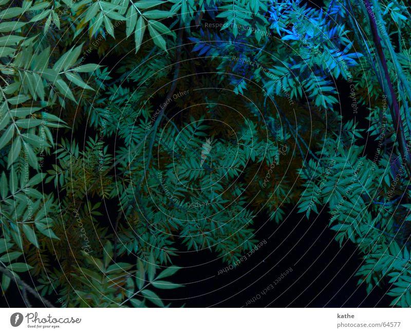 Garten Eden Baumkrone grün Sträucher Pflanze Nacht Flutlicht Paradies blau Beleuchtung