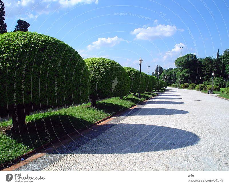 Garden's Ipiranga museum Himmel Durchgang Natur Brasilien Park Museum Garten garden ipiranga tree blue sky way road