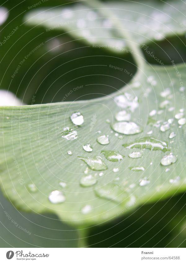 green grün Blatt Pflanze Baum Regen Natur Garten