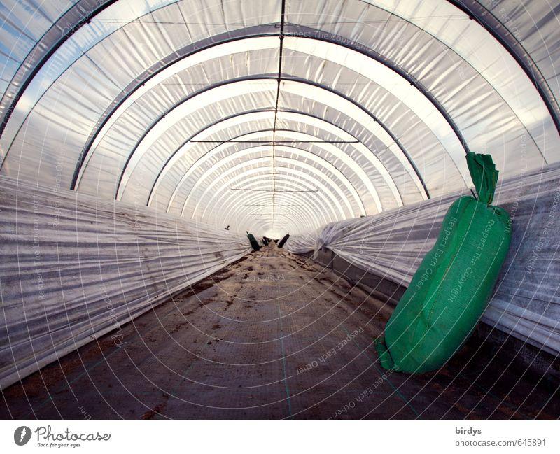 Winterschlaf grün grau Business elegant leuchten warten Wachstum Perspektive Klima ästhetisch rund Landwirtschaft lang graphisch Tunnel Symmetrie