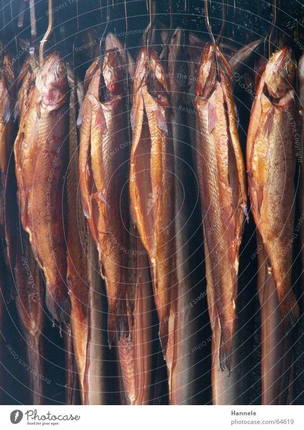 Todesurteil Ernährung Fisch mehrere Rauch viele hängen zerkleinern geräuchert Räucherfisch