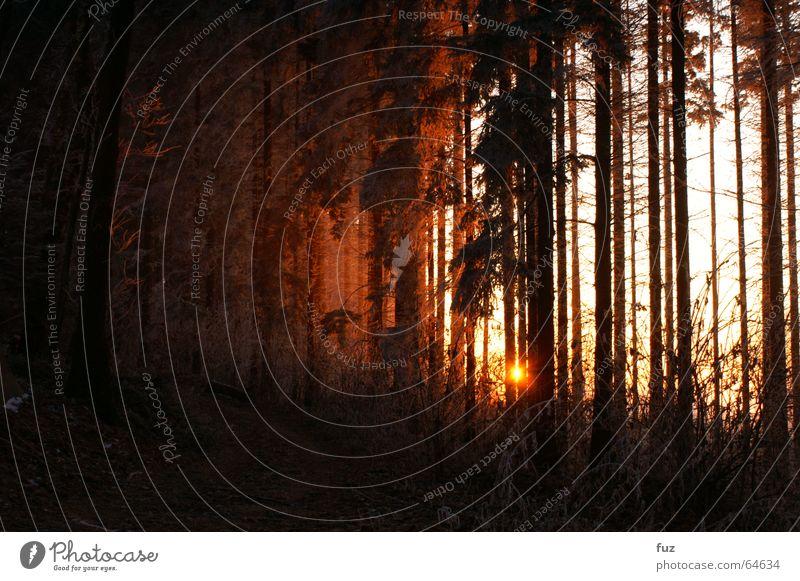 Sonnenuntergang im Schwarzwald Natur Winter Wald Freiheit Wege & Pfade Landschaft Nebel Romantik Abenddämmerung