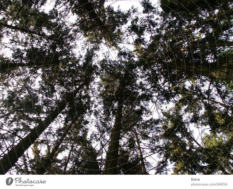 Grünes Dach Natur Himmel Baum grün Wald dunkel Zufriedenheit hell Deutschland eng Baumstamm beruhigend