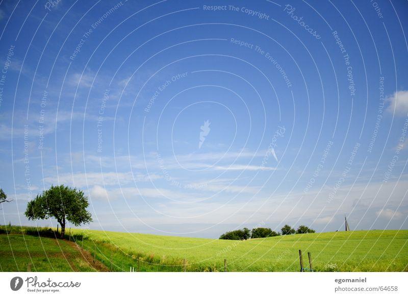 Windows XP mit Baum Himmel grün Sommer Wolken Wiese Frühling Wege & Pfade Landschaft braun Feld Hügel Amerika Zaun