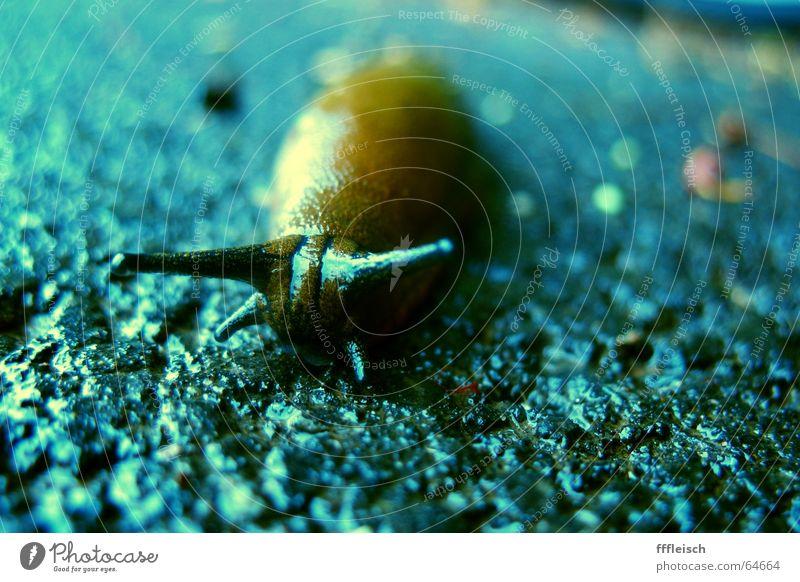 Einsame Schnecke Einsamkeit Nacktschnecken Tier Asphalt Trauer fühlermblau Traurigkeit