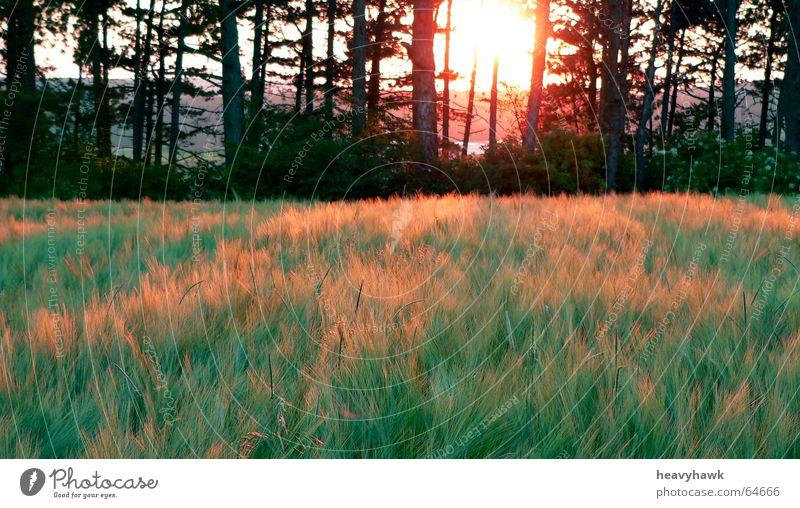 Die angenehme Stimmung der Natur Baum Feld