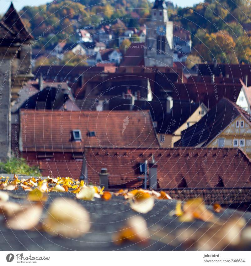Altstadt Herbstlaub Laubwald Herbstwald Hügel Berghang Tübingen Stadtzentrum bevölkert Haus Kirche Turm Fachwerkhaus Kirchturm Kirchturmuhr Dach Dachziegel