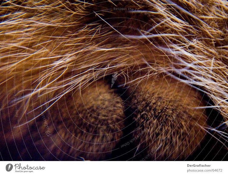 Pelztier-Ansichten Tier Fuß Katze Schutz geheimnisvoll Fell verstecken Pfote Geborgenheit Zehen kuschlig Kuscheln Versteck heizen Borsten