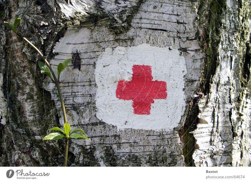 Wegmarkierung weiß Baum Pflanze rot Schilder & Markierungen Rücken Zeichen Baumrinde Birke