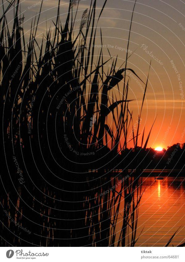 Sonnenbad Sonnenuntergang rot glühen brennen Romantik träumen Schilfrohr See ruhig Stimmung besinnlich Abenddämmerung Lampe Brand Himmel Denken Freiheit Natur