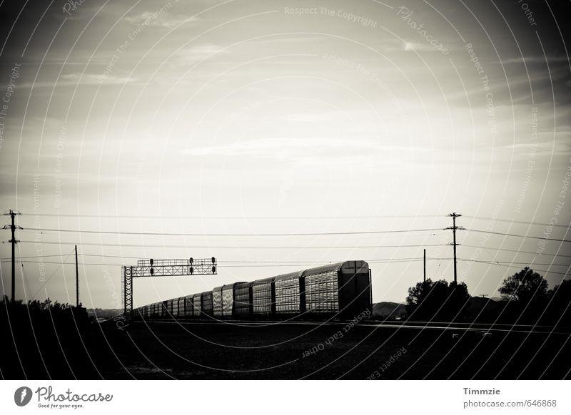 train, California Verkehr Güterverkehr & Logistik Bahnfahren Eisenbahn Güterzug Sehnsucht Fernweh Bewegung Horizont USA Schwarzweißfoto Außenaufnahme