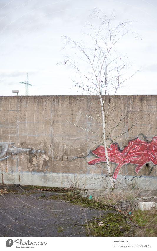 birke. Umwelt Natur Himmel Wolken Klima Wetter Pflanze Baum Gras Sträucher Wiese Ruine Mauer Wand Straße Wege & Pfade Strommast Straßenbeleuchtung Beton
